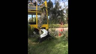 The majestic secretarybird in slow motion