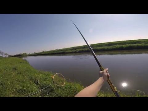 Angeln mit der Bologneserute in flachen Fließgewässern