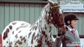 Appaloosa Horse Music Video|| Id Love To Change The World