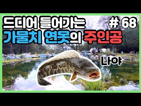 20평짜리 연못의 생물들의 겨울나기 대비법