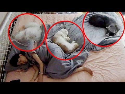 五隻貓一起睡是五倍的崩潰