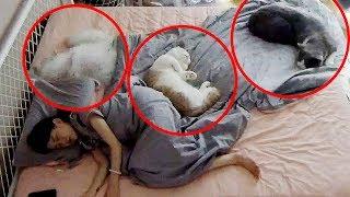 【喵來啦】監控和5只貓睡1晚會發生什麼?看完不想養貓了