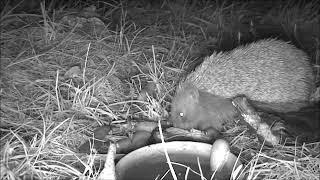 Wildlife Trail Camera - 31.7.2019
