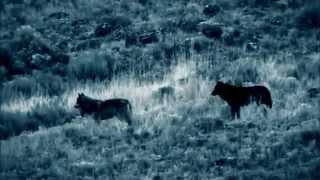 Video Blue Bucks - Vlkodlak