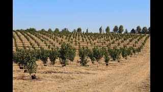 How to Plant a Hazelnut Orchard