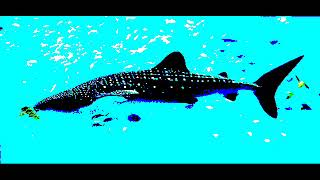 Video Miramare: Velká ryba/ The big fish (part 4, version 1)