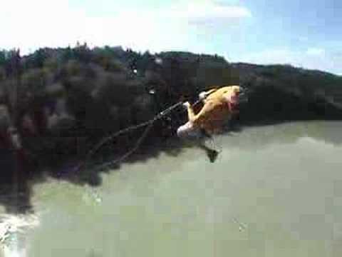Nowa odmiana bungee jumping