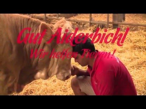 Wie die Würmer auf der Kühe beeinflussen