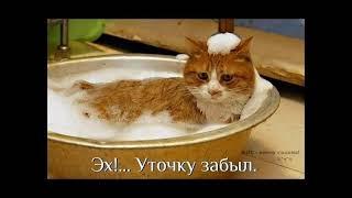 😂Смешные картинки с кошками! Смотреть всем!!!😂 Выпуск 7