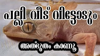 10 Best Home Remedies to Get Rid of Lizards