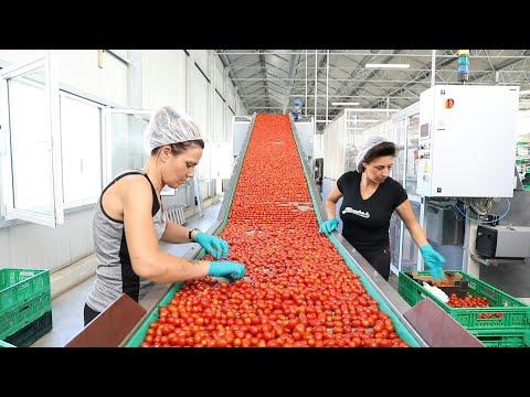 العرب اليوم - شاهد: أكبر موقع إيطالي للزراعة بالتقنية المائية يعوّل على