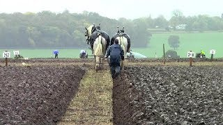National Ploughing Championship 2018 Horses and wind
