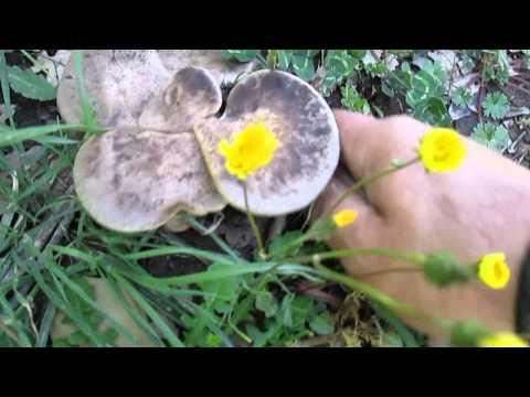 Quello che è la migliore medicina a un fungo di unghie