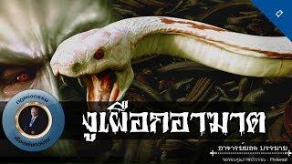 อาจารย์ยอด : งูเผือกอาฆาต [ผี]