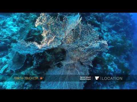 أفلام الطبيعة HD …الشعاب المرجانية في المياه النقية