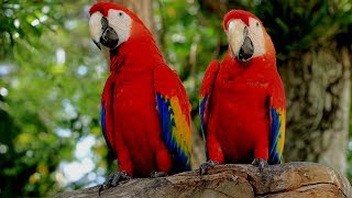 Exotic Scarlet Macaws | Most Beautiful Parrot Bird Video | Wild Animal at Zoo AnimalTubeShow Part-14