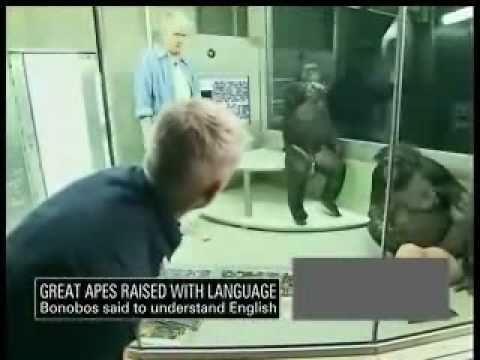Kaarten met apen, Intelligent Monkeys and Apes