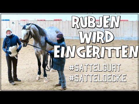 RUBJEN WIRD EINGERITTEN ✮ Longiergurt + Satteldecke ♥