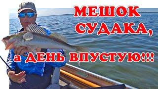 Мешок Судака - А День Впустую (Рыбалка 2019) | Vovabeer