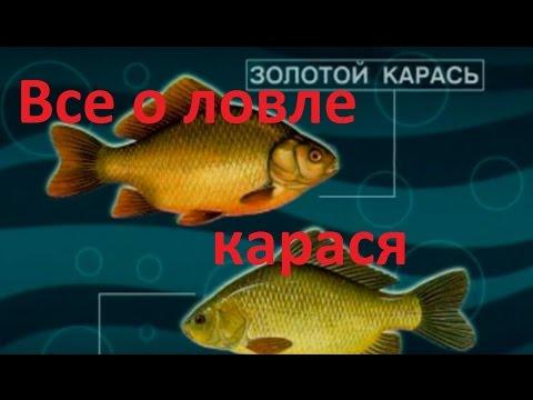 Диалоги о рыбалке - Выпуск 215 - Все о  ловле карася.