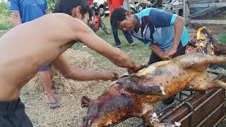 ล้มหมูเพื่อทำอาหารต้อนรับแขกที่มางานศพ ใช้วิธีแบบดั้งเดิมร่วมด้วยช่วยกัน ตามวิถีชีวิตของคนอีสาน