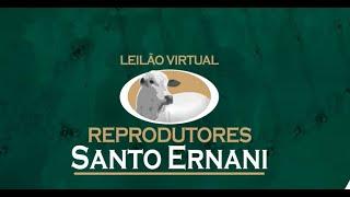 LEILÃO VIRTUAL REPRODUTORES SANTO ERNANI