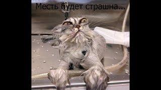 Демотиваторы про котиков и не только. №2