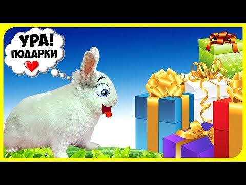 ПЕРВЫЕ ПОКУПКИ ДЛЯ МОЕГО КРОЛИКА! Реакция кролика на подарки + вопрос/ответ с Бусинкой