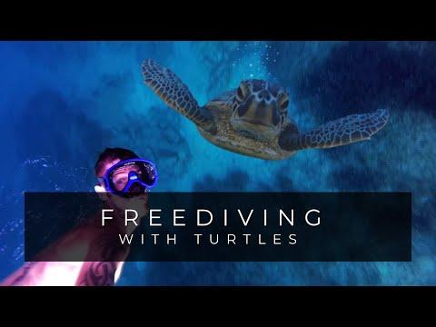 Μια χελώνα στα Σπαρτιά [video]
