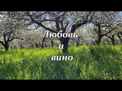 Любовь и вино (клип)