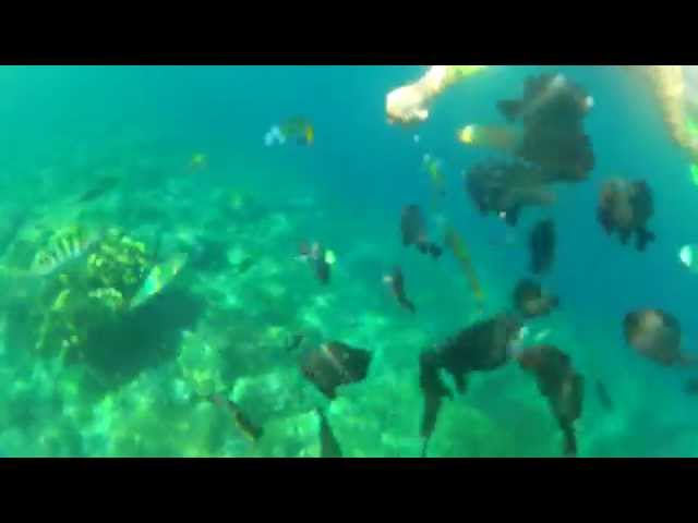 HOT FILIPINO BABES SNORKELING FOR THE FIRST TIME GO FEEDING BREAD TO FISH a RABBI JEW BARKER 1313