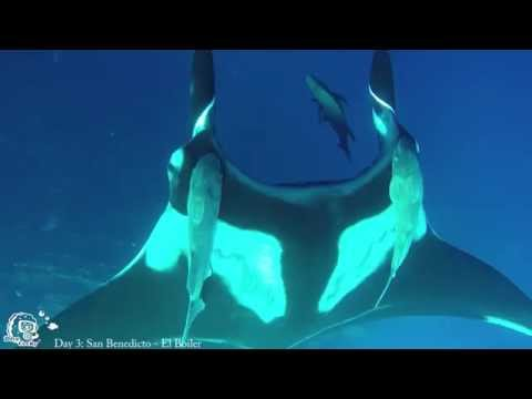 Diving Revillagigero Socorro - Part I , Socorro Islands,Mexiko