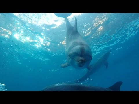 Diving with dolphins on GoPro Hero 4 Black