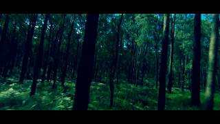 Forest Cinematic FPV Drone