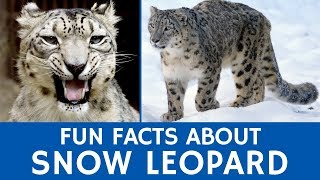 Facts about Snow Leopards for Learners | Interactive Video of Wild Animals