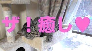 【ねこ】癒し系ネコw