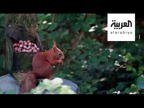 العرب اليوم - شاهد: لقطات رائعة لاستيلاء الحيوانات والنباتات على الأماكن العامة خلال إغلاق