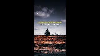 #Incendios #TalaDeÁrboles #Mundial #Amazonas #Brasil #México #Bosques #Selvas #CO2 #Calentamiento