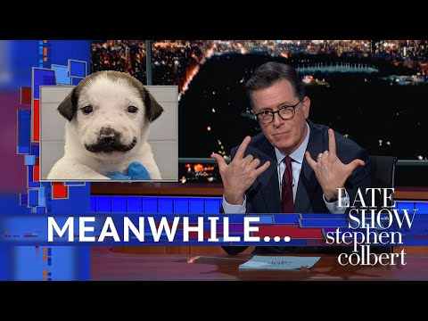 ProgressVideo TV: Meanwhile    This Puppy Has A Mustache via The