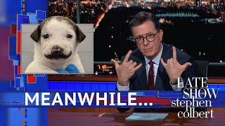 """Meanwhile... A shelter dog in New York went viral this week because she has markings that look like a cute little mustache!  Subscribe To """"The Late Show"""" Channel HERE: http://bit.ly/ColbertYouTube For more content from """"The Late Show with Stephen Colbert"""", click HERE: http://bit.ly/1AKISnR Watch full episodes of """"The Late Show"""" HERE: http://bit.ly/1Puei40 Like """"The Late Show"""" on Facebook HERE: http://on.fb.me/1df139Y Follow """"The Late Show"""" on Twitter HERE: http://bit.ly/1dMzZzG Follow """"The Late Show"""" on Google+ HERE: http://bit.ly/1JlGgzw Follow """"The Late Show"""" on Instagram HERE: http://bit.ly/29wfREj Follow """"The Late Show"""" on Tumblr HERE: http://bit.ly/29DVvtR  Watch The Late Show with Stephen Colbert weeknights at 11:35 PM ET/10:35 PM CT. Only on CBS.  Get the CBS app for iPhone & iPad! Click HERE: http://bit.ly/12rLxge  Get new episodes of shows you love across devices the next day, stream live TV, and watch full seasons of CBS fan favorites anytime, anywhere with CBS All Access. Try it free! http://bit.ly/1OQA29B  --- The Late Show with Stephen Colbert is the premier late night talk show on CBS, airing at 11:35pm EST, streaming online via CBS All Access, and delivered to the International Space Station on a USB drive taped to a weather balloon. Every night, viewers can expect: Comedy, humor, funny moments, witty interviews, celebrities, famous people, movie stars, bits, humorous celebrities doing bits, funny celebs, big group photos of every star from Hollywood, even the reclusive ones, plus also jokes."""