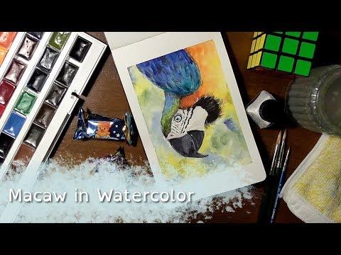 White Nights 36 Pan Set test painting - Macaw [speedpaint]