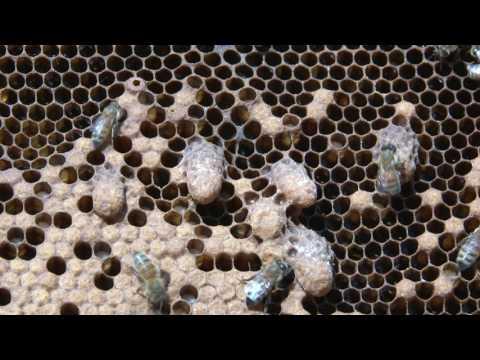 La varice variqueuse et la sécheresse de la peau