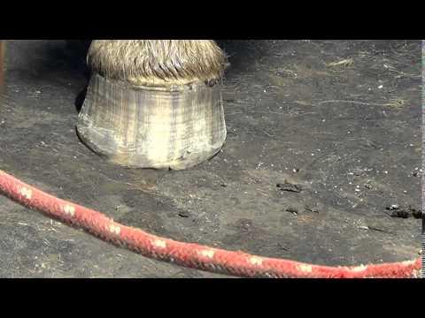 Lunas para sa kuko halamang-singaw at daliri