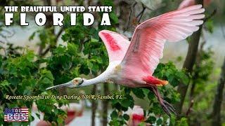 USA Florida State Symbols/Beautiful Places/Song SWANEE RIVER w/lyrics