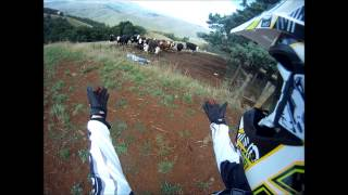 Chased By Cow's On Dirtbike (YZ250F)