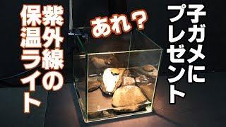 子亀に【保温ライト】プレゼントした結果・・・なにこれ?詐欺?【カメ水槽③】