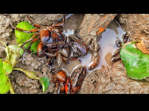 Oily crab fish/bapon bipro