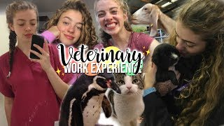 All The Veterinary Work Experience I Did! Advice & What I Learned 🦜