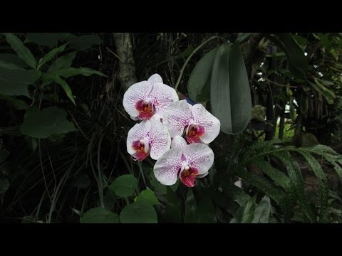 , title : 'How Orchids Grow in Hawaii