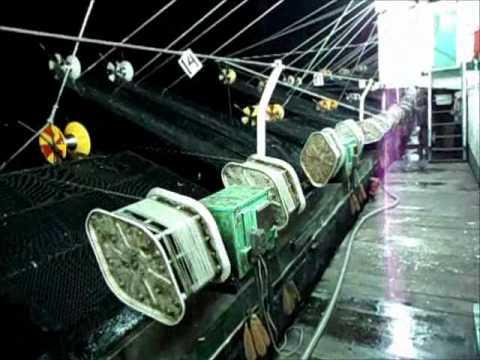 pesca de calamar en argentina
